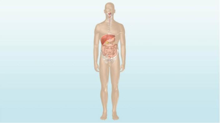 Como posso lidar com meus problemas de intestino?